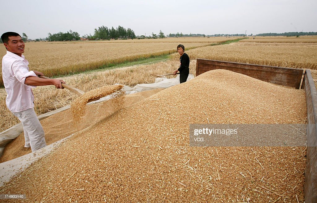 Farm workers shovel wheat grain being harvested in a field on May 29, 2011 in Mengcheng County, Anhui Province of China. Anhui province will put 125,000 combine harvesters into this wheat harvest season, and it's estimated that the work will be completed basically in 10 days.