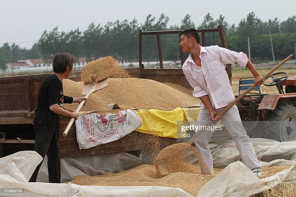 Farm workers shovel wheat grains being harvested in a field on May 29, 2011 in Mengcheng County, Anhui Province of China. Anhui province will put 125,000 combine harvesters into this wheat harvest season, and it's estimated that the work will be completed basically in 10 days.