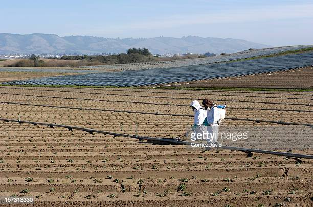 Farm worker sprühen Setzlinge