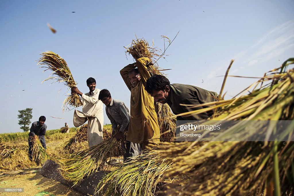 Farm workers thresh rice during a crop harvest in the district of Chiniot in Punjab, Pakistan, on Sunday, Oct. 13, 2013. Prime Minister Nawaz Sharifs four-month-old government is struggling to revive the $231 billion economy crippled by chronic energy shortages and a spike in violence from a Taliban insurgency in the northwest. Photographer: Asad Zaidi/Bloomberg via Getty Images