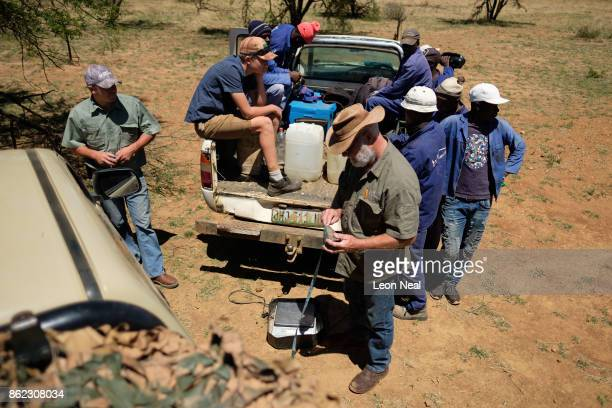 Farm workers wait as the trimmed horn of a black rhino is weighed measured and marked at the ranch of rhino breeder John Hume on October 16 2017 in...