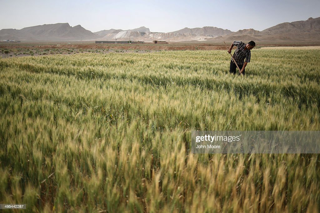 Farmer Abbas Hamamian works his wheat field on June 3, 2014 in Meymeh, Iran. He said he has owned the 4-hectare farm for 15 years, and this year's rains have been good for his crop. Iran is marking the 25th anniversary of the death of the Ayatollah Khomeini and his legacy of the Islamic Revolution.