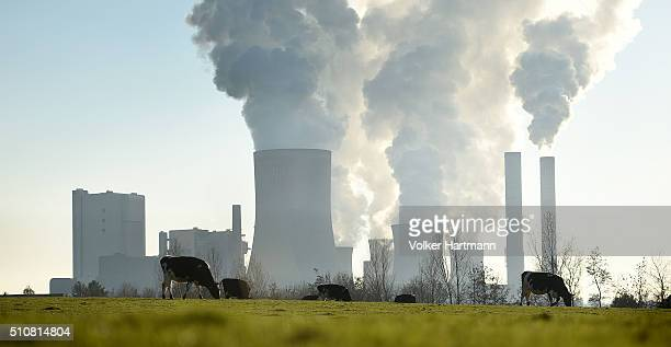 A farmer and a cow are standing in front of the RWE Niederaussem coalfired power plant while Steam rises from cooling towers on February 16 2016 near...
