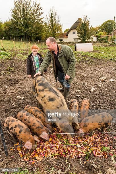 Agricultor y su hija cuidar de los cerdos en una granja ecológica