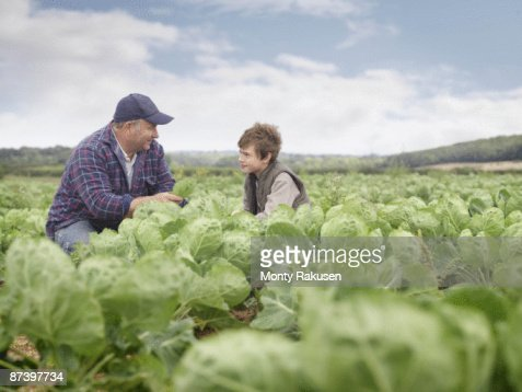 Farmer And Son In Crop Field : Stock Photo