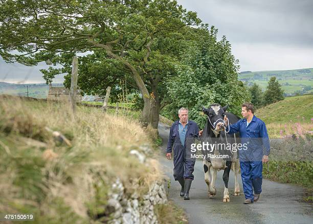 Farmer and son leading dairy cow on road