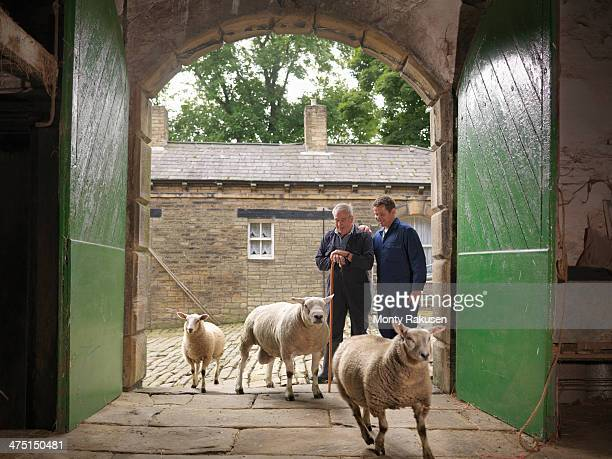 Farmer and son watching sheep enter old barn