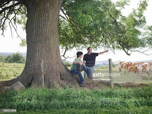 Farmer and son with Guernsey calves