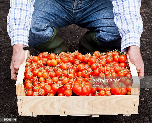 Farmer and tomatoes