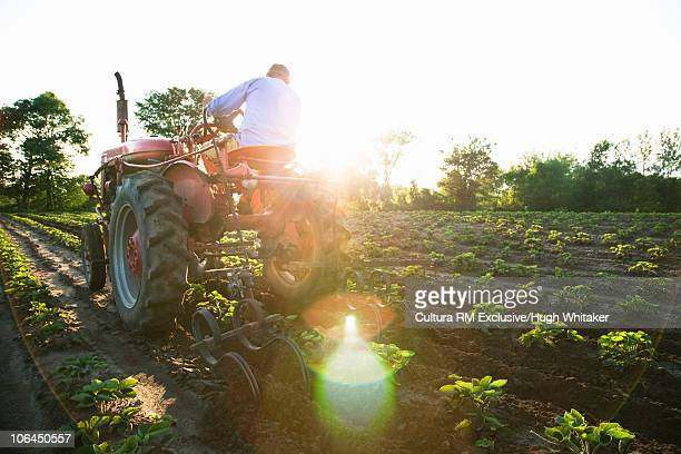 Farmer and tractor in field