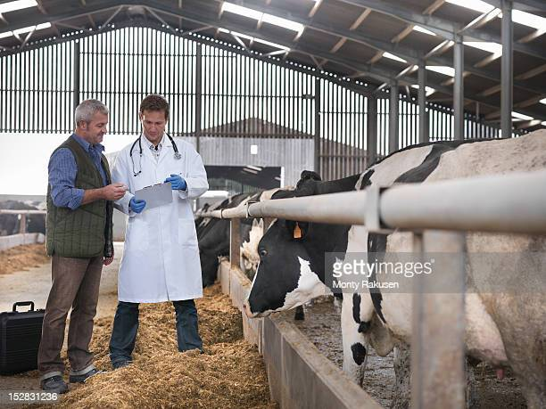 Farmer and vet discussing cows in barn on dairy farm