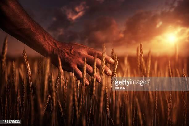 Agricoltore al tramonto