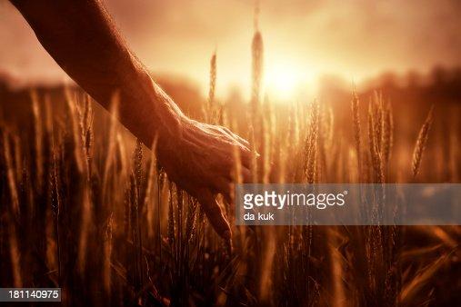 Farmer at sunset