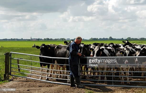 Farmer at work in Friesland in the Netherlands