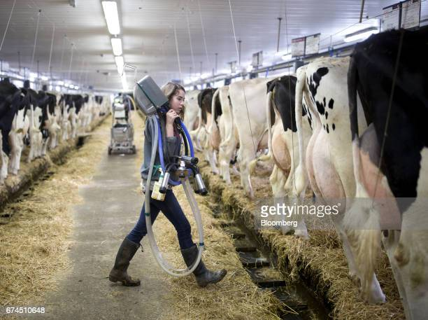 A farmers carries a cow milking machine at a dairy farm in Granby Quebec Canada on Saturday April 22 2017 Trade groups for US dairy farmers have...