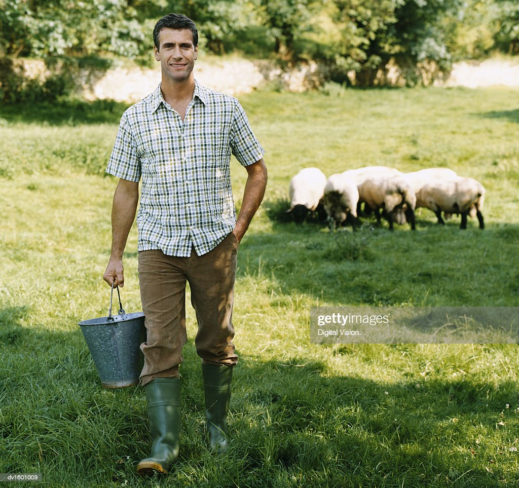 Farmer Carrying a Bucket in a Field With a Small Group of Sheep : Stock Photo