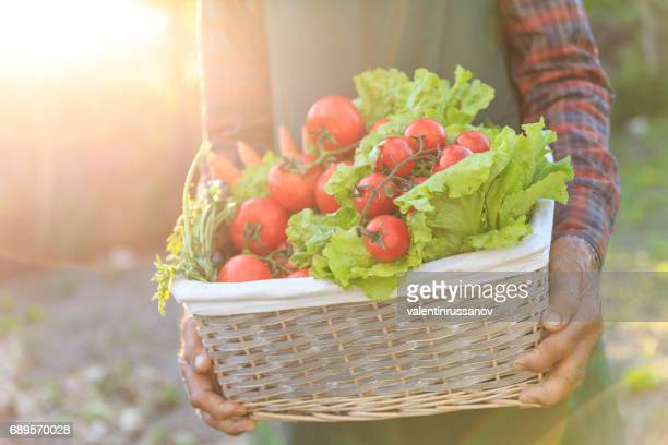 Farmer carrying basket with raw vegetables