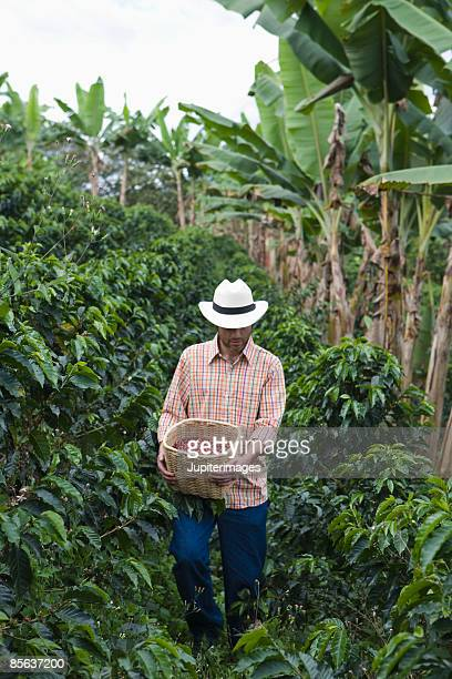 Farmer carrying coffee berries on plantation , Colombia