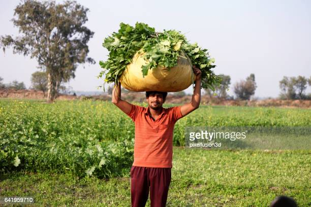 Landwirt mit Senf & Hafer Ernte