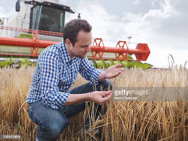 Farmer checking crop