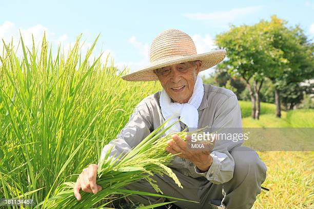 Farmer Checking Rice Ear at Rice Paddy in Summer