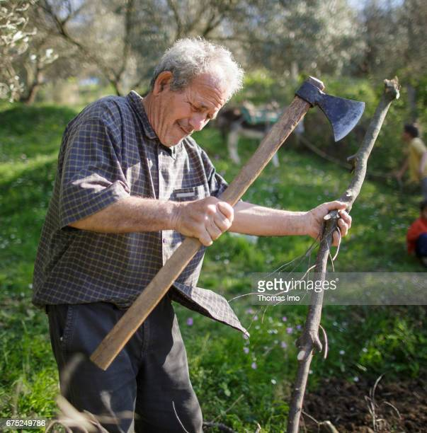 A farmer chops wood on the Subashi plantation Here olives are cultivated for the production of olive oil on March 28 2017 in Tirana Albania