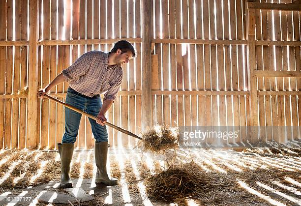 Farmer cleaning straw
