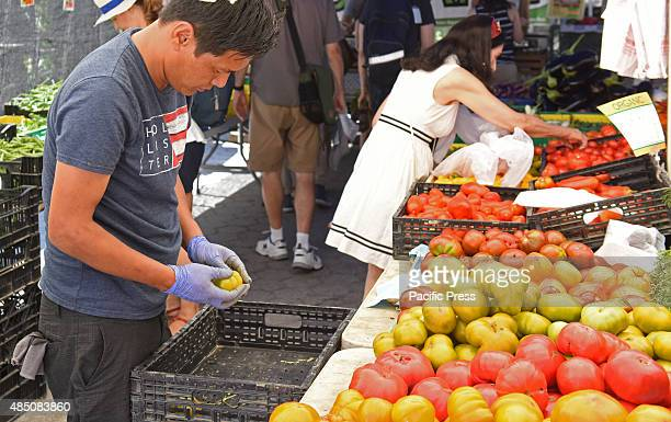 Farmer cleans yellow tomatoes Union Square Park greenmarket is one of New York City's largest and oldest dating back to 1976