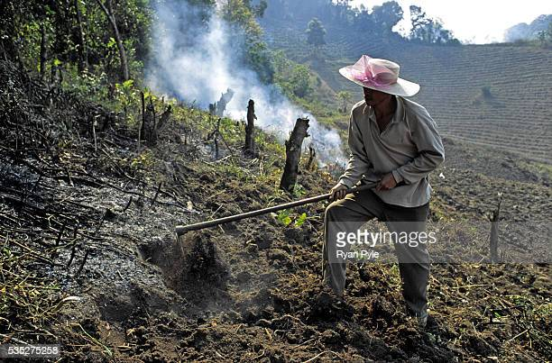 A farmer clears land after burning the bush and jungle in China's Xishuangbanna region In the 1940's and 1950's China's Xishuangbanna region was a...