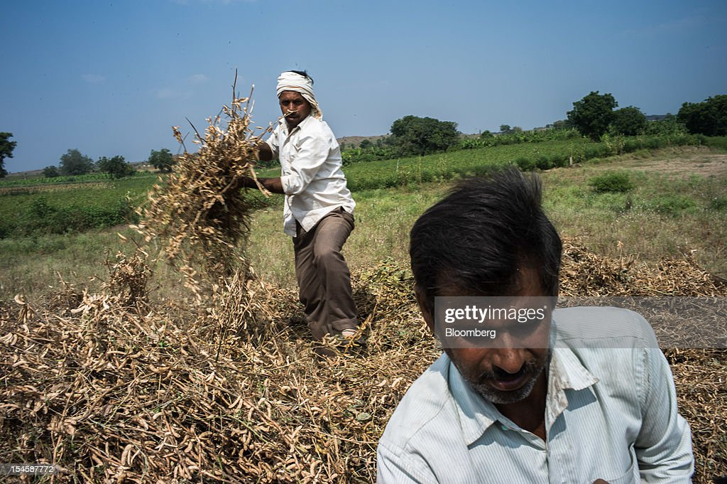 A farmer collects harvested soybean crop to feed into a thrasher to separate soybeans from the brush in the district of Burhanpur, Madhya Pradesh, India, on Friday, Oct. 19, 2012. Global soybean consumption will drop about 3 million metric tons in 2012-2013 as record prices curb demand for the oil made from the oilseed for food and biofuel, Thomas Mielke, executive director of Oil World, said. Photographer: Sanjit Das/Bloomberg via Getty Images