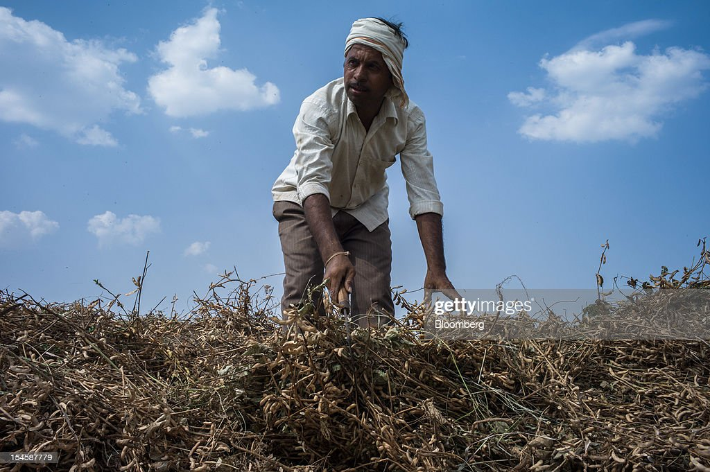 A farmer collects harvested soybean crop to feed to a thrasher to separate soybeans from the brush in the district of Burhanpur, Madhya Pradesh, India, on Friday, Oct. 19, 2012. Global soybean consumption will drop about 3 million metric tons in 2012-2013 as record prices curb demand for the oil made from the oilseed for food and biofuel, Thomas Mielke, executive director of Oil World, said. Photographer: Sanjit Das/Bloomberg via Getty Images