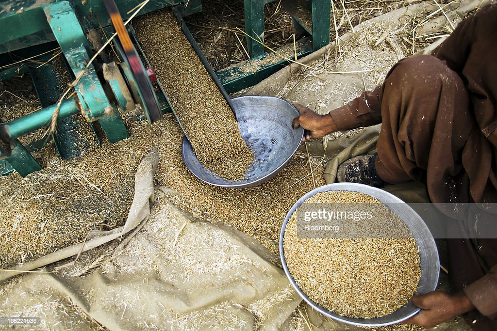 A farmer collects threshed wheat with a bowl during a harvest in the Chakwal district of Punjab province, Pakistan, on Saturday, May 4, 2013. Pakistan wheat output to increase this year, the U.S Department of Agriculture's Foreign Agricultural Service said in a report posted today on its website on April 4. Photographer: Asad Zaidi/Bloomberg via Getty Images