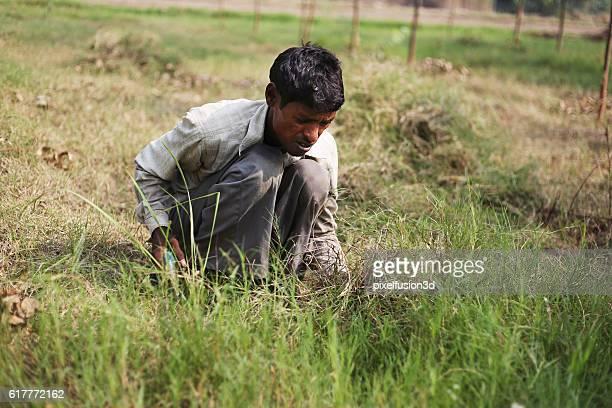 Farmer cutting grass by using scythe
