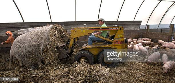 Farmer Dave Struthers right and Jonathan Struthers put down fresh bedding for pigs on a farm northeast of Collins Iowa US on Monday June 13 2011 Corn...