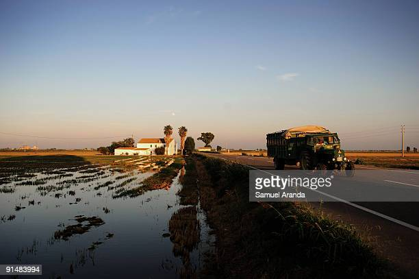 A farmer drives his tractor past rice fields during harvest time in the Ebro Delta on October 6 2009 in Aposta near Valencia Spain The Ebro Delta is...