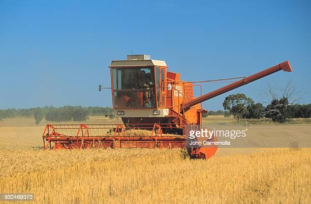 Farmer Driving Combine in Wheat Field