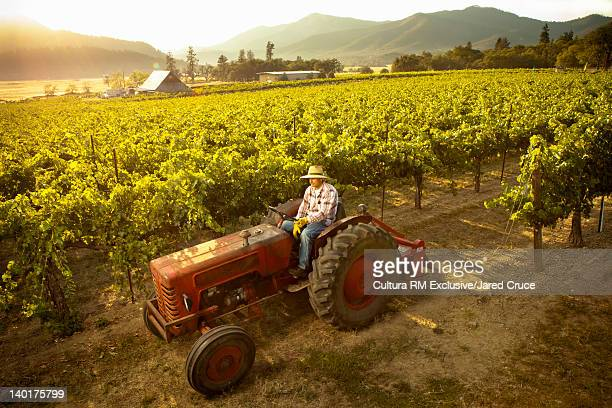Farmer driving tractor in vineyard