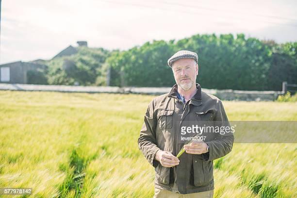 Farmer examining wheat in a field