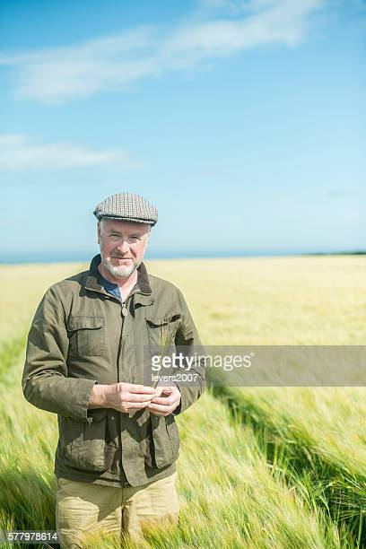 Farmer examining wheat in a field