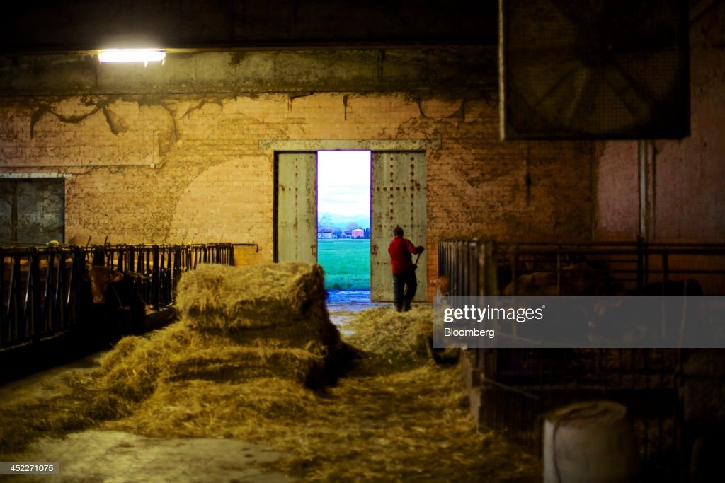 A farmer feeds hay to his herd of Reggiana or red cows, whose milk is used in the production of traditional Parmigiano Reggiano cheese, in a barn at his farm in Praticello di Gattatico, Italy, on Monday, Nov. 25, 2013. Italian borrowing costs dropped at an auction of six-month bills as investors await signals from the European Central Bank about further stimulus. Photographer: Gianluca Colla/Bloomberg via Getty Images