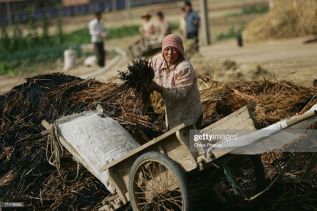A farmer finds unburnt wheat after a fire in a wheat field in Tangyu Township on June 9, 2006 in Lantian County of Shaanxi Province, China. The fire burnt about 200 Chinese mu (about 33.3 acres) of wheat ready for harvest, which belongs to over 50 families. The accident seriously threatened the income of farmers this year. The cause of the fire in under investigation. China plans to increase its annual grain production capacity to approximately 500 million tons by 2010, a key target for the drive of building a new socialist countryside, the country's project to advance the development of rural areas, according to state media.
