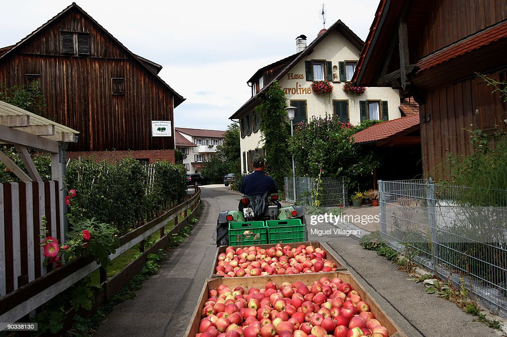Farmer Franz Krammer drives fresh apples towards his refrigerated container during the apple harvest next to the lake Constance on September 4, 2009 in Lindau, Germany. The lake is situated in Germany, Switzerland and Austria near the Alps. More then 1500 farmers grow apples in the lake Constance area.