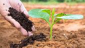 Close up Farmer hand giving plant organic humus fertilizer to plant
