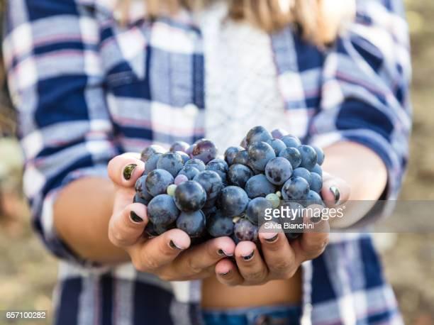 farmer hands holding bunch of grape