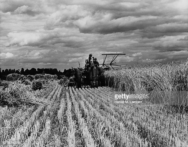 Farmer Harvesting Field By Tractor