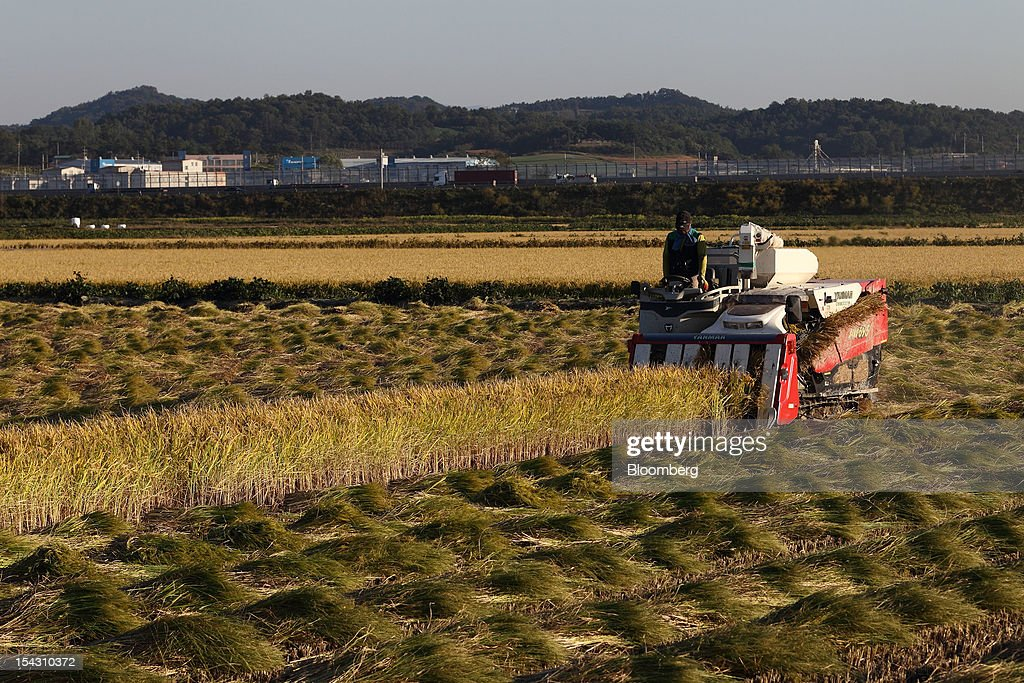 A farmer harvests rice with a combine harvester in a paddy field in Asan, South Korea, on Thursday, Oct. 11, 2012. South Korea will boost production of rough rice to 5.801 million metric tons in the year that starts Nov. 1, compared with an estimated 5.616 million a year earlier, the U.S. Department of Agriculture's Foreign Agricultural Service said on Aug. 2 in a report posted on its website. Photographer: SeongJoon Cho/Bloomberg via Getty Images