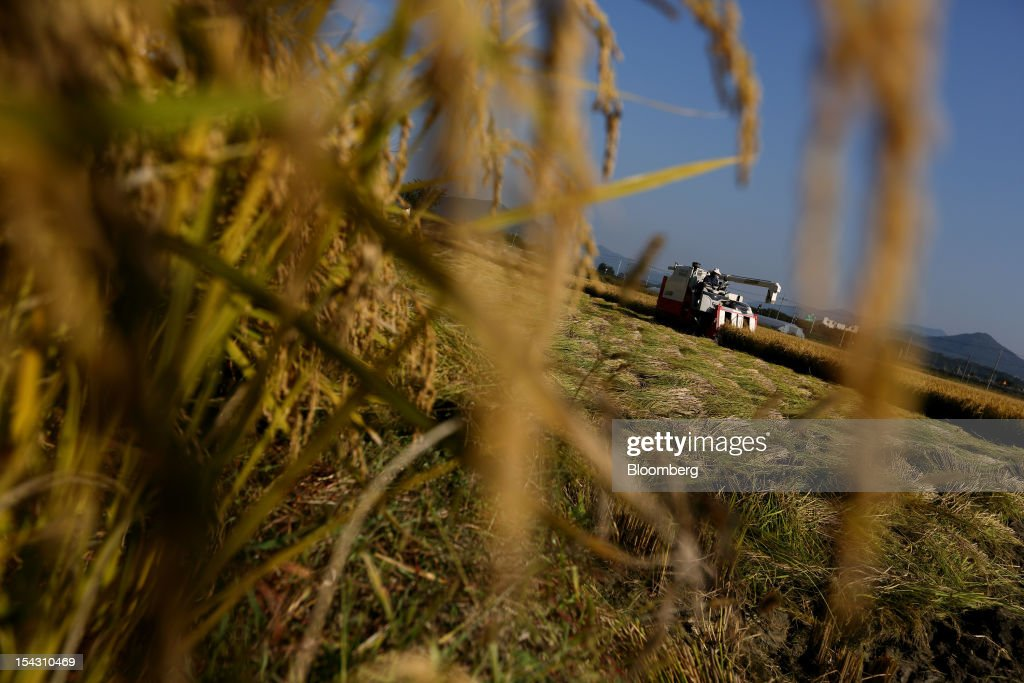 A farmer harvests rice with a combine harvester in a paddy field in Icheon, South Korea, on Thursday, Oct. 11, 2012. South Korea will boost production of rough rice to 5.801 million metric tons in the year that starts Nov. 1, compared with an estimated 5.616 million a year earlier, the U.S. Department of Agriculture's Foreign Agricultural Service said on Aug. 2 in a report posted on its website. Photographer: SeongJoon Cho/Bloomberg via Getty Images