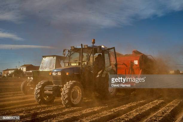 A farmer harvests Tiger nuts on a tractor on January 18 2016 in Valencia Spain According to the Valencia's Tiger Nut Regulatory Council the...