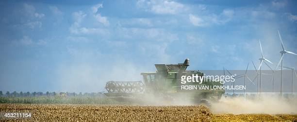 A farmer harvests wheat in a field with his harvester on August 5 2014 in Swiftebrant The Netherlands with wind turbines in the background Wheat is...