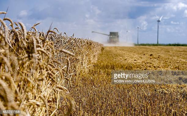 A farmer harvests wheat in a field with his harvester on August 5 2014 in Swiftebrant The Netherlands Wheat is the world's third biggest crop after...